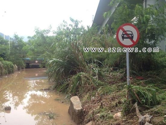 深圳暴雨致美女积水3米女洼地被困溺亡_v暴雨冰山司机老婆我的txt图片